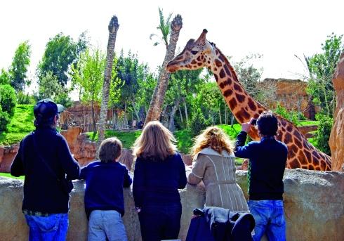Bioparc Familia observando a las jirafas_G